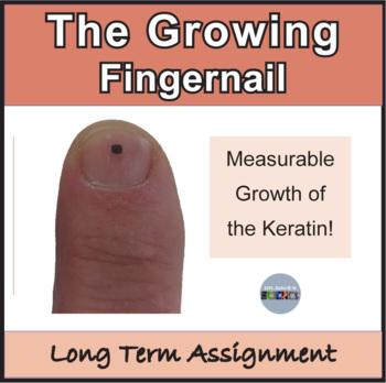 Skin Activity: Growing Fingernail