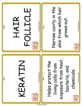 Skin Vocabulary Cards