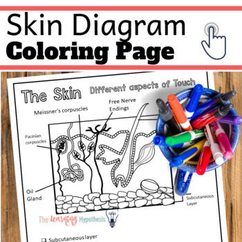 Skin Diagram.  Aspects of Touch. Nervous System Coloring Pages.