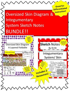 Skin Diagram Foldable/Sketch Notes BUNDLE!- Great for Practice &Differentiation!