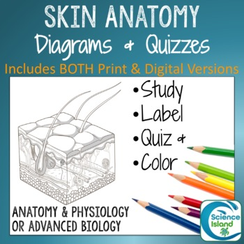 Skin diagrams and quiz by science island teachers pay teachers skin diagrams and quiz ccuart Gallery