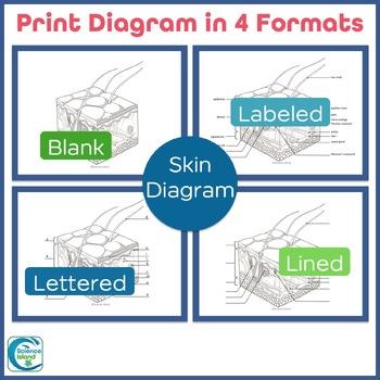 Skin Diagrams and Quiz