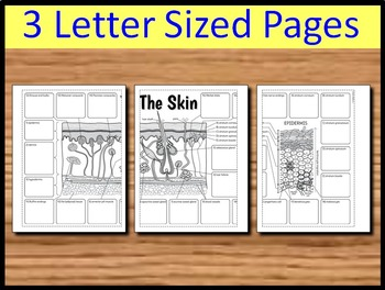 Skin Foldable - Big Foldable for Interactive Notebooks or Binders