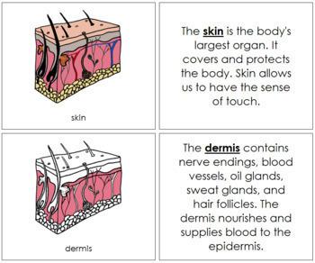Skin Nomenclature Book