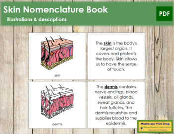 Skin Nomenclature Book