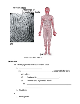 Skin Notes Outline Part A