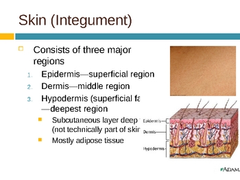 Skin Notes PPT
