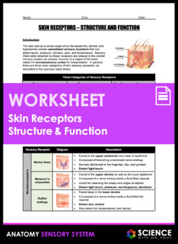 Skin Receptors Anatomy - Structure and Function (Touch)