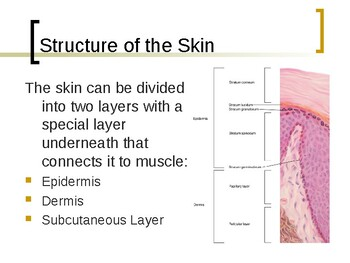 Skin Structure, Growth and Nutrition PowerPoint