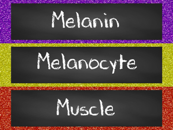 Skin and Muscular System Word Wall