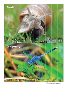 Skip Counting and Counting Bugs puzzle pack (letter sized)