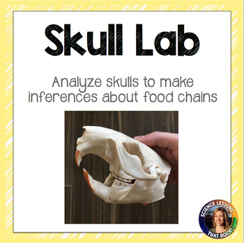 Skull Lab- Ecology and Food Chains Lab