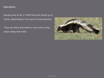 Skunk - Power Point - Information Facts Pictures History