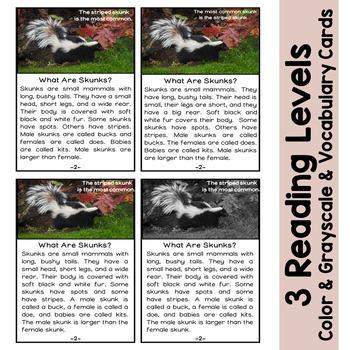 Skunks Non Fiction Reading
