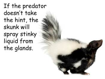 """Skunks Nonfiction PowerPoint """"Book"""" for First or Second Grade"""