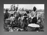 Slave Resistance Powerpoint