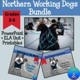 Sled Dogs & Working Dogs of the North PowerPoint + Printable Unit