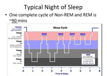 Sleep Cycle/Consciousness Notes