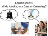 Sleep Cycle/Consciousness