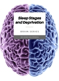 Sleep Stages, Cycles, and Deprivation