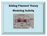 Sliding Filament Muscle Contraction Modeling Activity