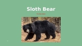 Sloth Bear - Power Point - Information Facts Pictures History