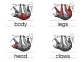 Sloth Nomenclature