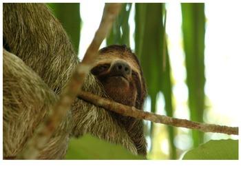 Sloth Photos