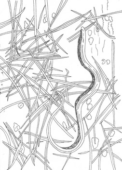Slow Worm Colouring Sheet