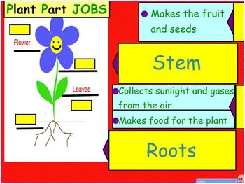 SmartBoard Presentation for Plant Parts and Animal Life Cycles
