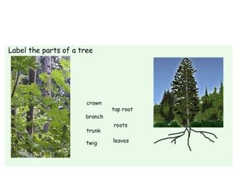 Science SmartBoard - Plants