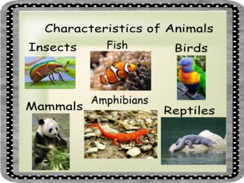 Smartboard Animal Family Characteristics