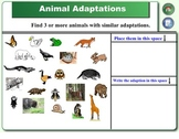Smartboard Animal Lessons:  Ecosystems, Adaptations, and Food Chains