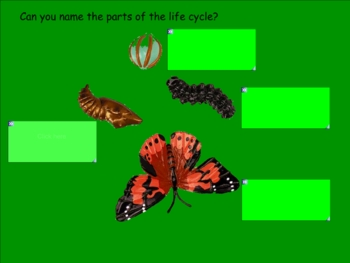 Smartboard Life Cycle of a Butterfly