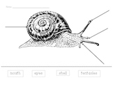 Snail Diagram