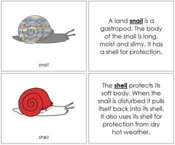 Snail Nomenclature Book (Red)