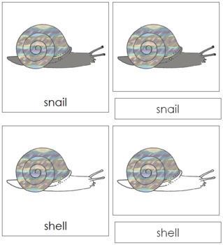 Snail Nomenclature Cards