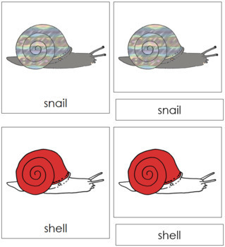 Snail Nomenclature Cards (Red)