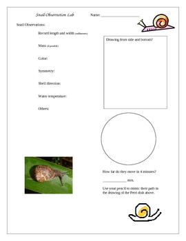 Snail Observation Lab (Phylum Molluska)