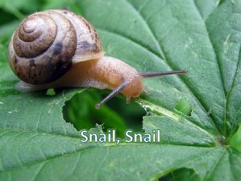 "Snail, Snail & a Melodic ""Snail Mail"" Game"