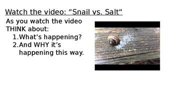 Snail vs. Salt Osmosis