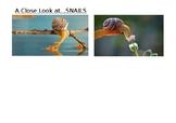 Snails Project