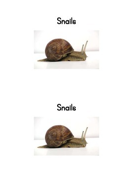 Snails; an Emergent reader and naming activity