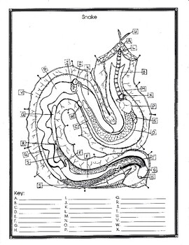 Snake Anatomy and Simulated Dissection Worksheet