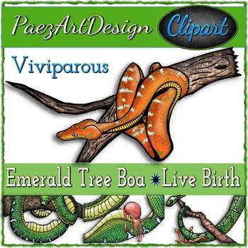 Snake Births CLIPART Bundle - Oviparous Cobra and Viviparous Boa