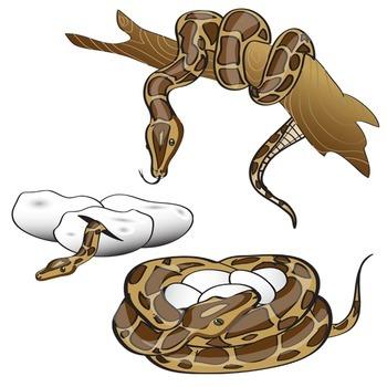 Snake Clip Art - 25 Piece Set