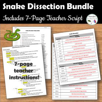 Snake Dissection Bundle
