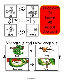 Snake Lapbook for 2 File Folders with 19 Booklets and a Themed Writing Page