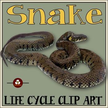 Snake Life Cycle Clip Art