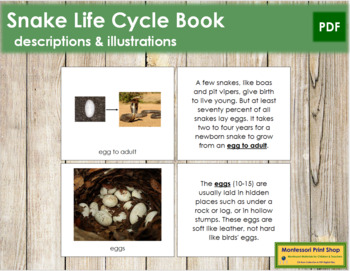 Snake Life Cycle Nomenclature Book